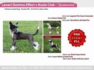 Lanart Domino Effect V Ksolo Club