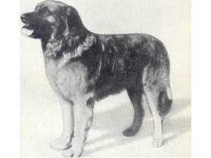 Arko V. Leonberg