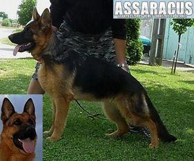 Fanta of Assaracus