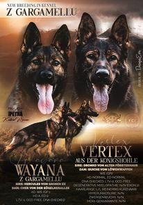 Wayana z Gargamellu