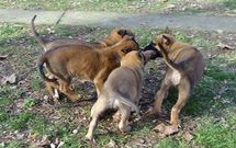W litter DarkFall (8 weeks)
