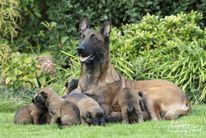 Pups O'Pepper & Linck 3 weken