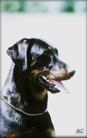Theemin Astra Canina