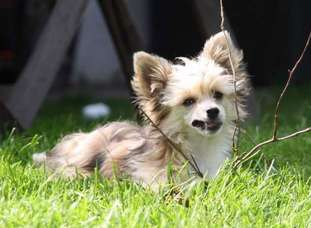Be My Dog's Ylenia Bella