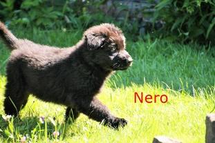 Nero Macaregra