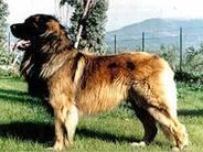 Radjhi von Löwenkraft