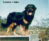 Xantos von Inka