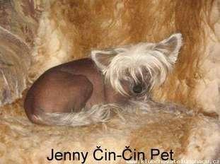 Jenny Cin-cin Pet