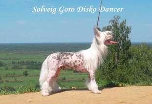 Solveig Goro Disco Dancer