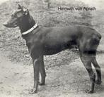 Helmuth Frauenlob von Haiterbach