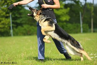 Ozzy European K9 training base