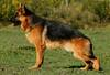 Inox vom Nordteich