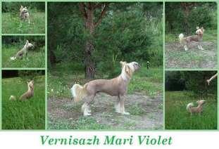 Vernisazh Mari Violet