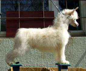 Shadow White Olorin