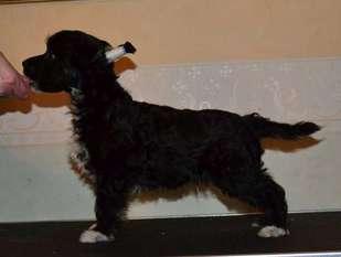 Fabulous Dogs Benjamin Franklin