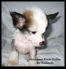 Madame Rock Rolla De Bullack