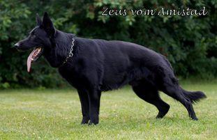 Zeus vom Amistad