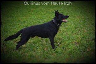 Quirinus vom Hause Iroh