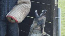 Anna vom Hunde-Hager
