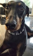 Sheila (Mill)