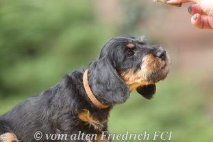 Kaiser vom alten Friedrich