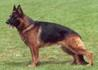 Dingo di Casa Mary (1997)