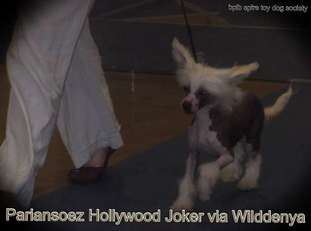 Pariansoez Hollywood Joker Via Wilddenya