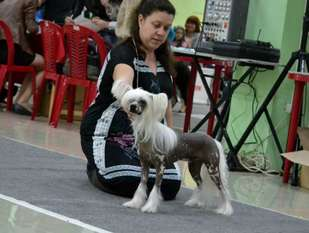 Volshebnik Ot Volnogo Psa