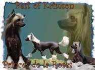 Best Of Krimson Princes De La Roses