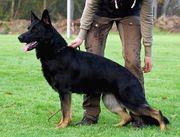 Milka von der Hundshardt