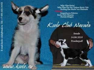 Ksolo Club Nevada