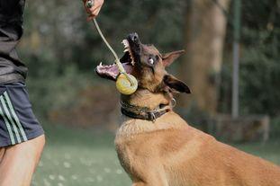 working-dog Fiffi