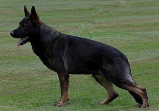 Buster vom Rhöner Hof