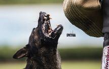 Rasko von den Wölfen