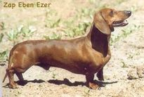 Zap Eben Ezer