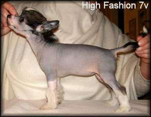 Blue Wing's High Fashion