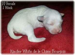Kinder White De Le Chien Bourjois