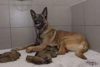 Pups Nyka & Qas 1 dag oud