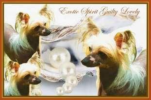 Exotic Spirit Guilty Lovely