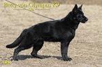 Betty von Olympus K9