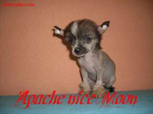 Apache Nice Moon Soncco Cua