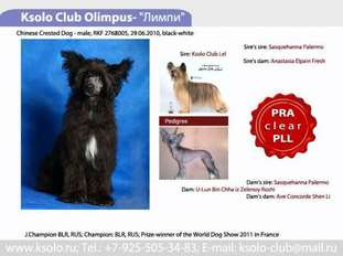 Ksolo Club Olimpus