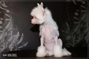 Mimi Dog Doll Kinross Shire