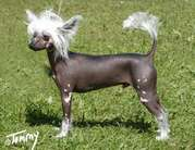 Dogcastle's Mr Avalon