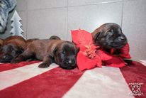 Pups Nyka & Arco 11 day's old
