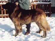 Leoniitan Romulus