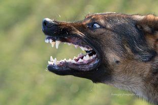 Wolf's Joy
