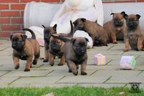 Pups Nyka & Arco 4 weeks old