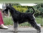Vivian Silver Grand Calvera