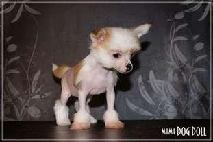 Mimi Dog Doll Zambezi